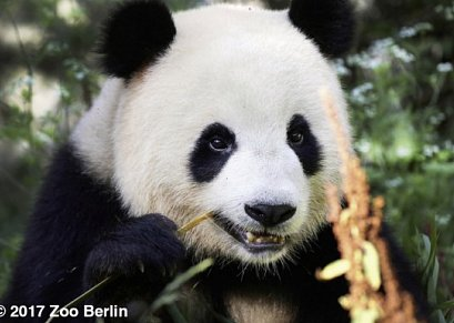 Zoo Berlin & A&O Berlin Mitte
