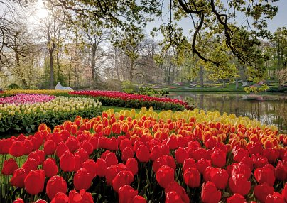 Keukenhof + Courtyard by Marriott Amsterdam Airport